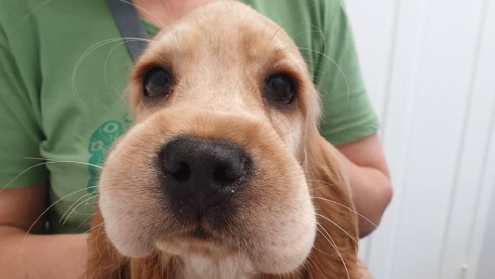 Un perro confunde un panal de abejas con comida y las terribles consecuencias no las olvidará jamás