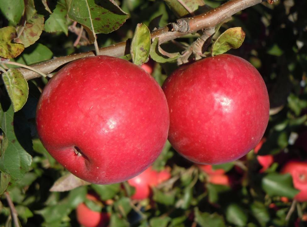 Manzanas - AFRUCAT - Archivo