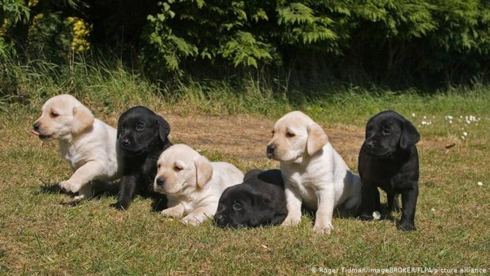 ctv-7tf-mascotas-perros