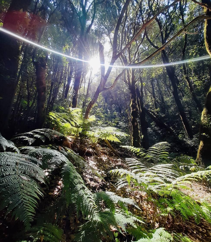El Pijaral, un bosque encantado: el sendero más bonito de Tenerife