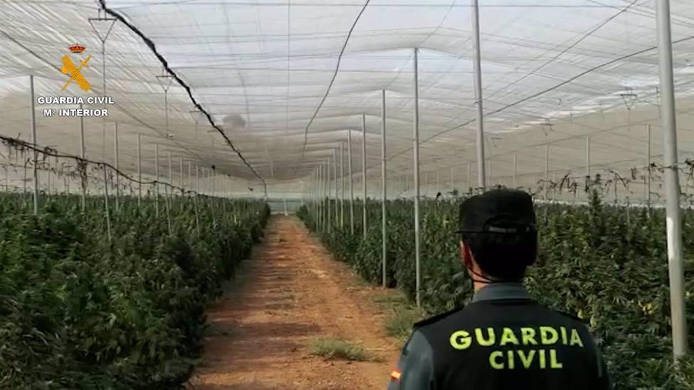 40.000 plantas de marihuana