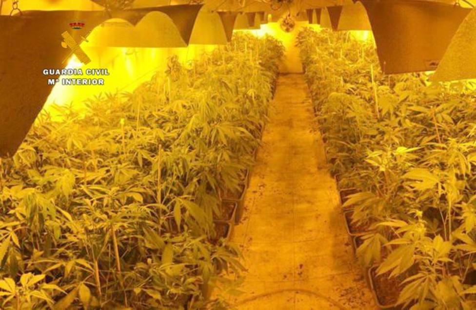 La Guardia Civil desmantela una plantación de marihuana dirigida a una asociación cannábica de Santander