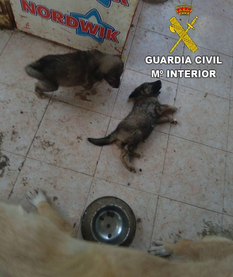 cachorros Benicarló