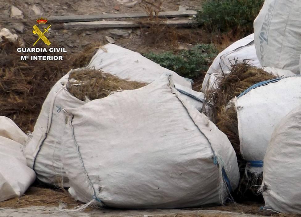 Investigan a un empresario agrícola por el robo de 9 toneladas de romero en Lorca