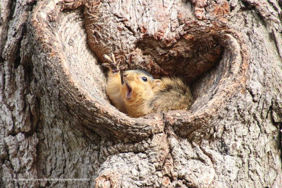 ctv-qws-840888corey-seeman-who-would-like-a-peanut-squirrels-at-the-university-of-michigan-00003651jpg