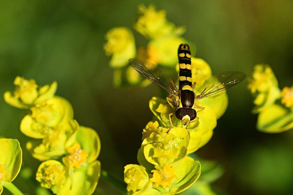 ctv-bsr-hoverfly-5228435 1920