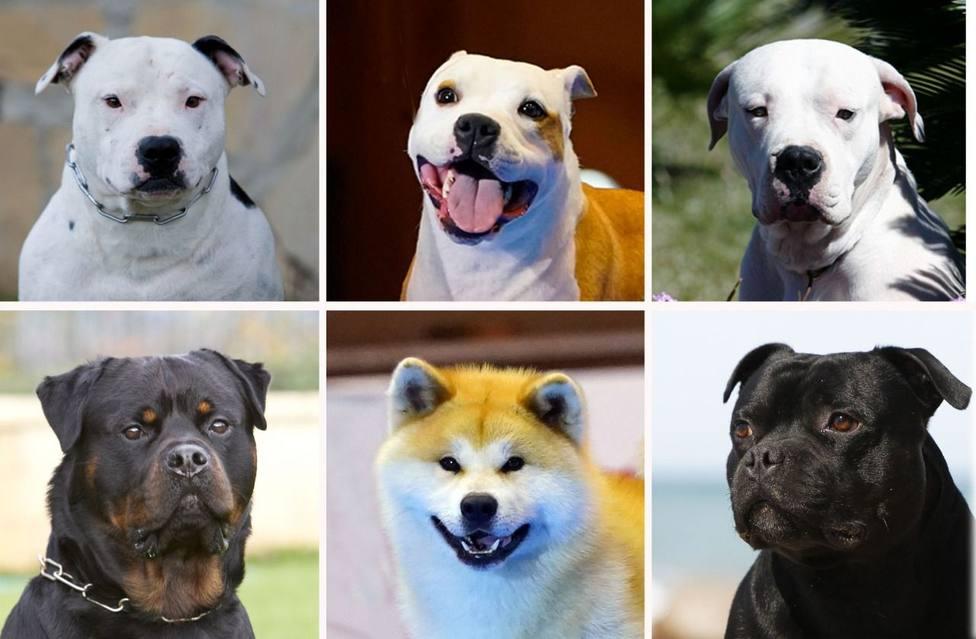 Así es la normativa de tenencia de perros que inclumplía el dueño de los tres boxer que mataron a un anciano
