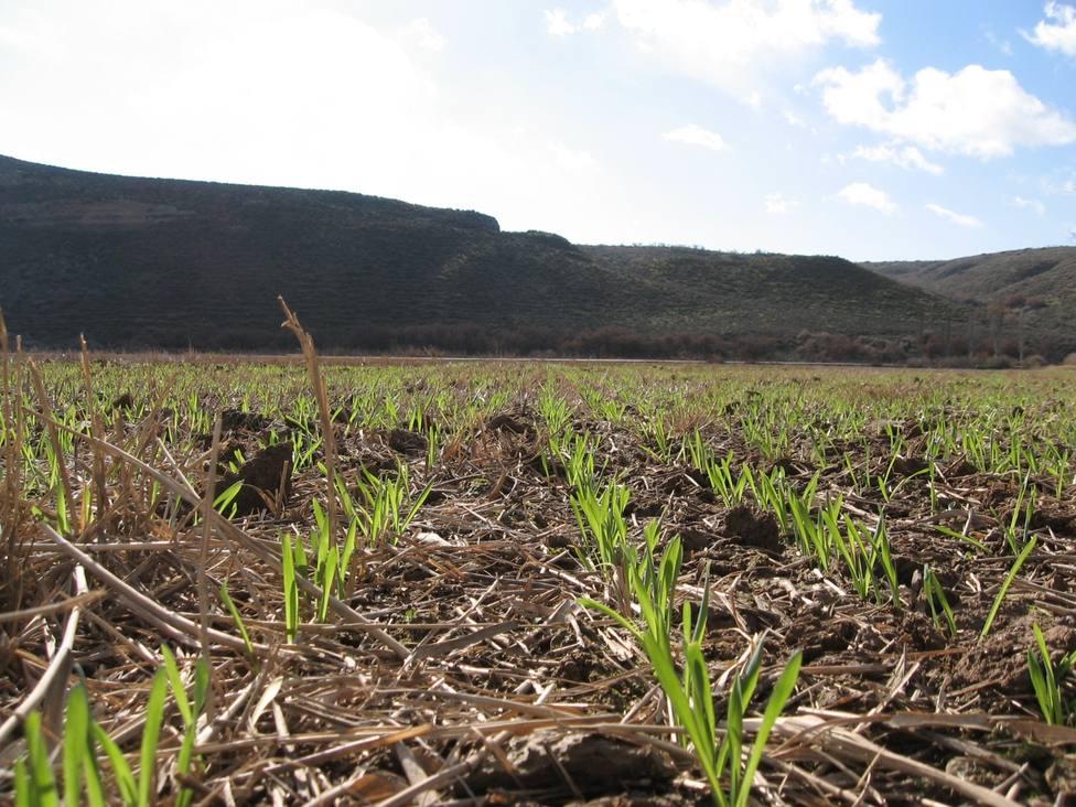 La agricultura de conservación, una gran aliada contra el cambio climático