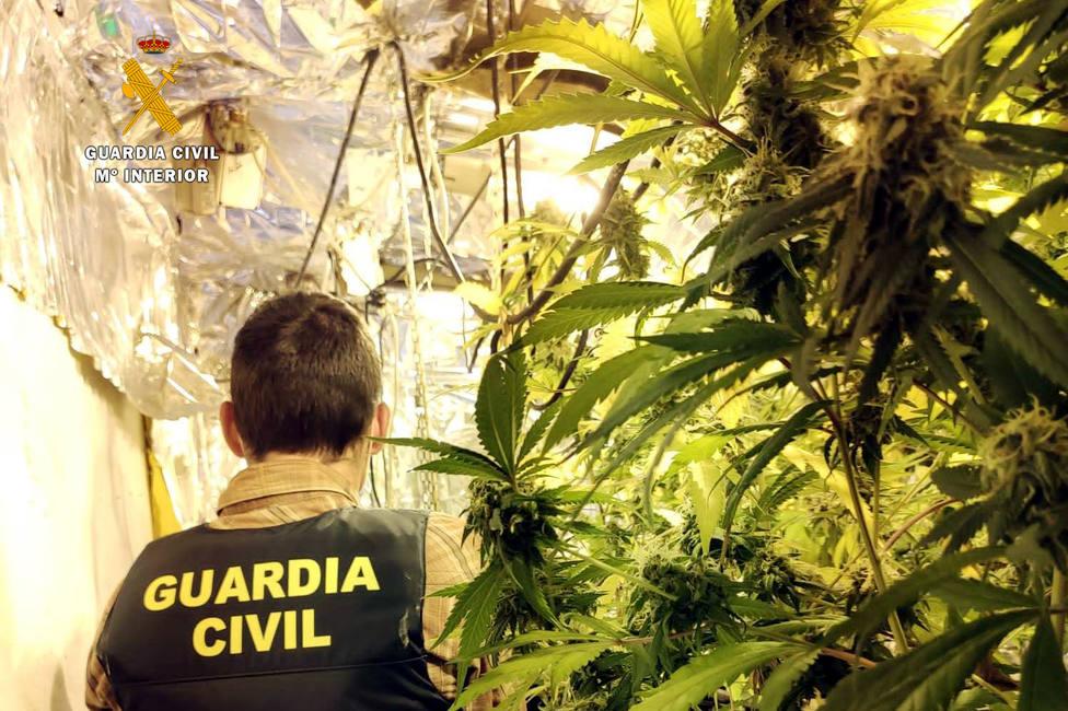 La Guardia Civil intervino 400 plantas