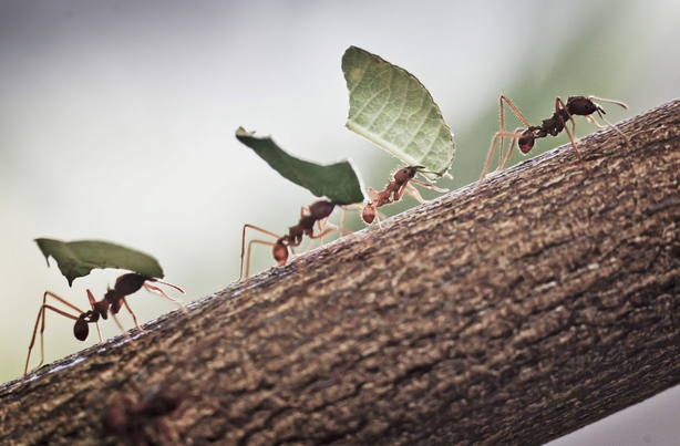 ¿Por qué aparecen las hormigas en nuestras casas en primavera?