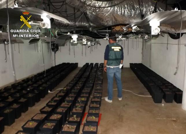 La Guardia Civil desmantela un grupo delictivo dedicado al cultivo ilícito de marihuana en Roche