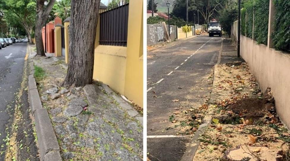 Árboles calle Concepción Salazar La Laguna