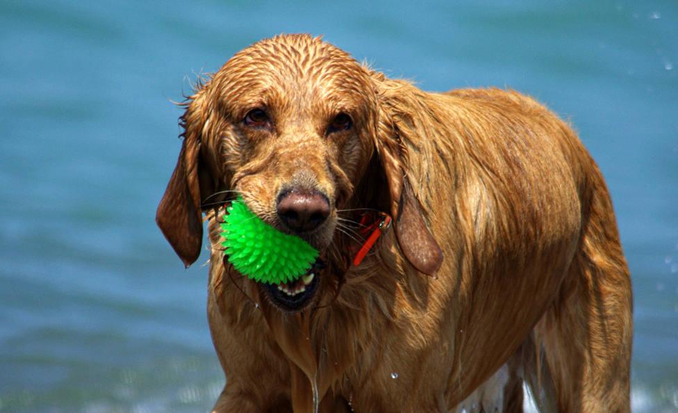 Cómo evitar que tu perro huela mal cuando se moja