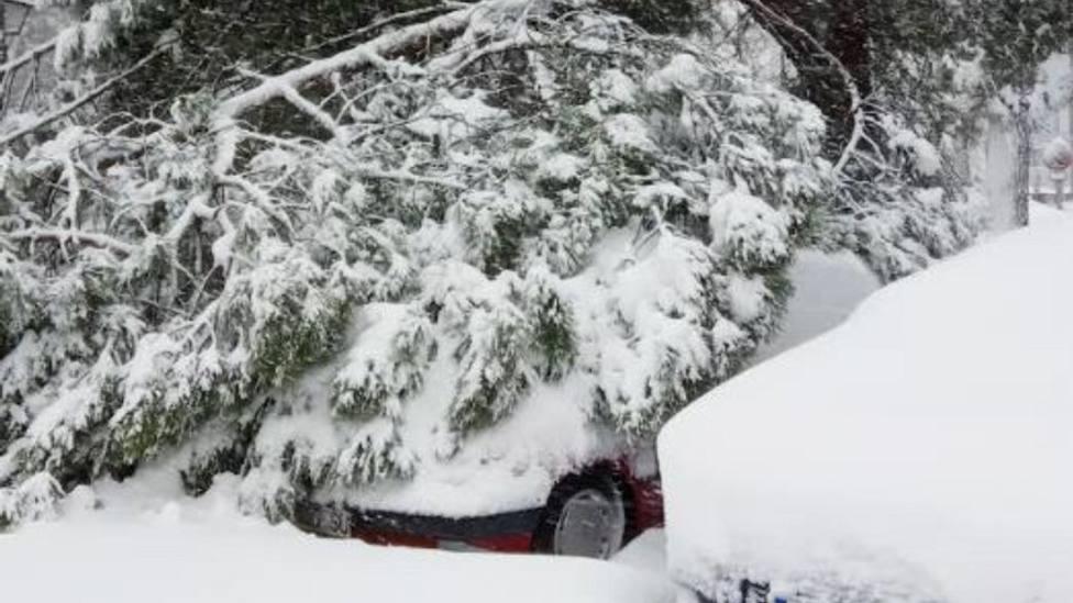 Filomena ha provocado daños en árboles, vehículos y viviendas