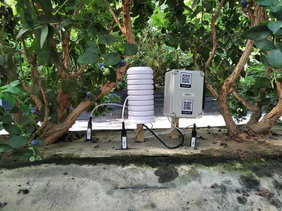 La Escuela de Ingeniería de la Universidad Loyola colabora en la monitorización de invernaderos de arándanos