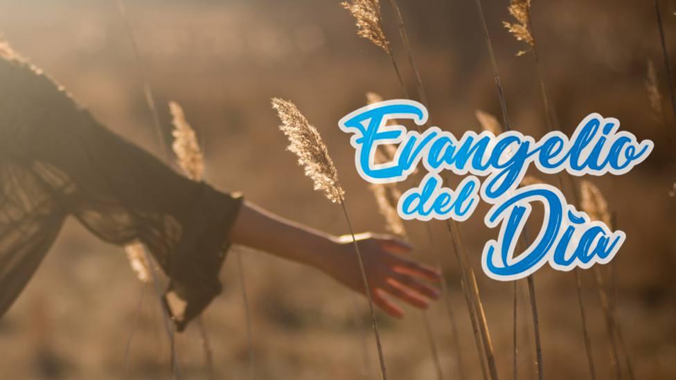 Evangelio 26 mayo: La Paz os dejo, mi Paz os doy
