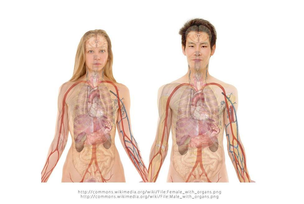 Buscan una nueva estrategia para mejorar la asignación de órganos en trasplantes de hígado - Córdoba - COPE