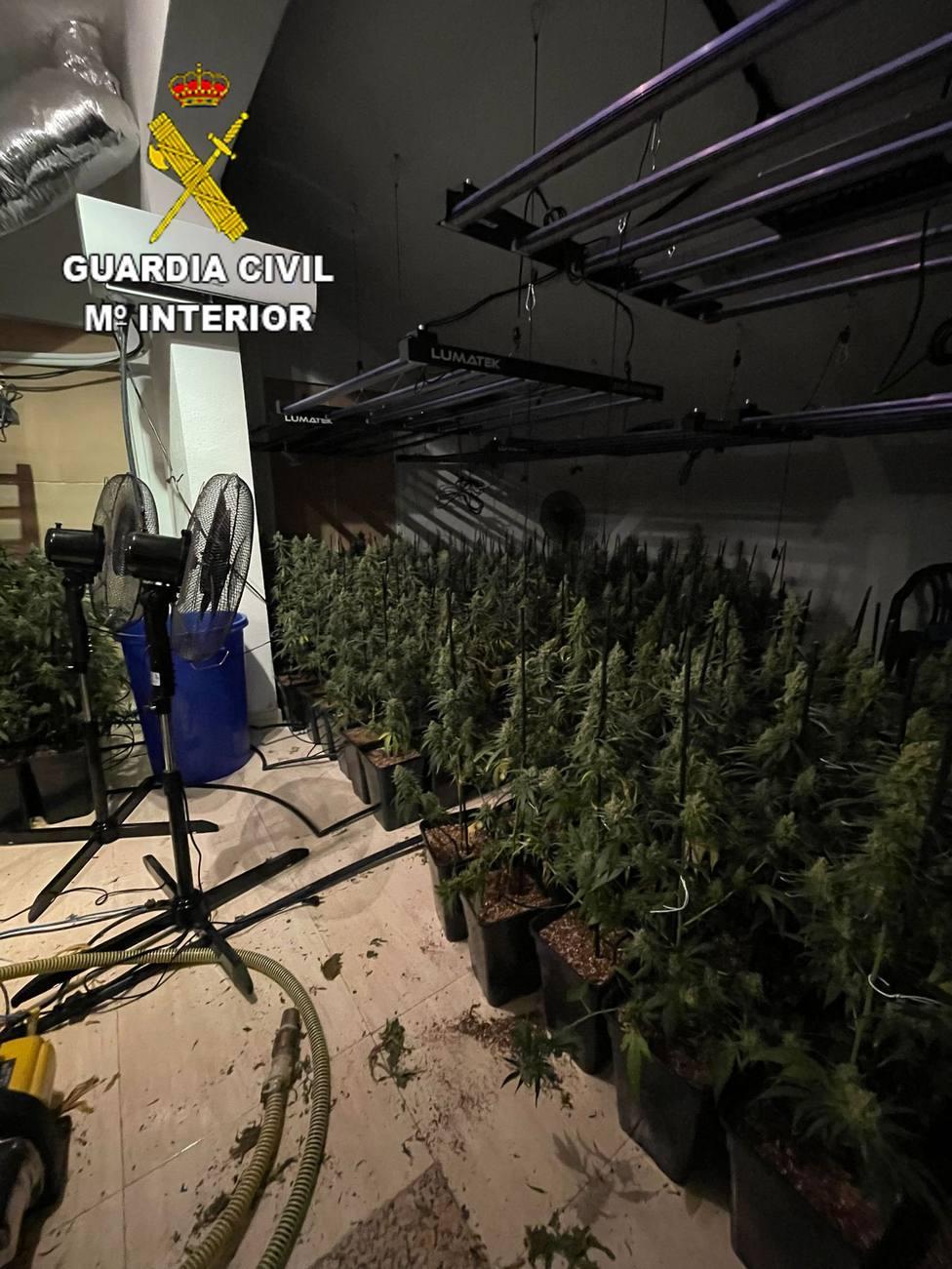 ctv-f7j-marihuana---chozascanales3