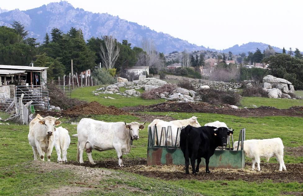 Unión de Uniones alerta sobre la pérdida de 1.800 ganaderos lácteos en un año