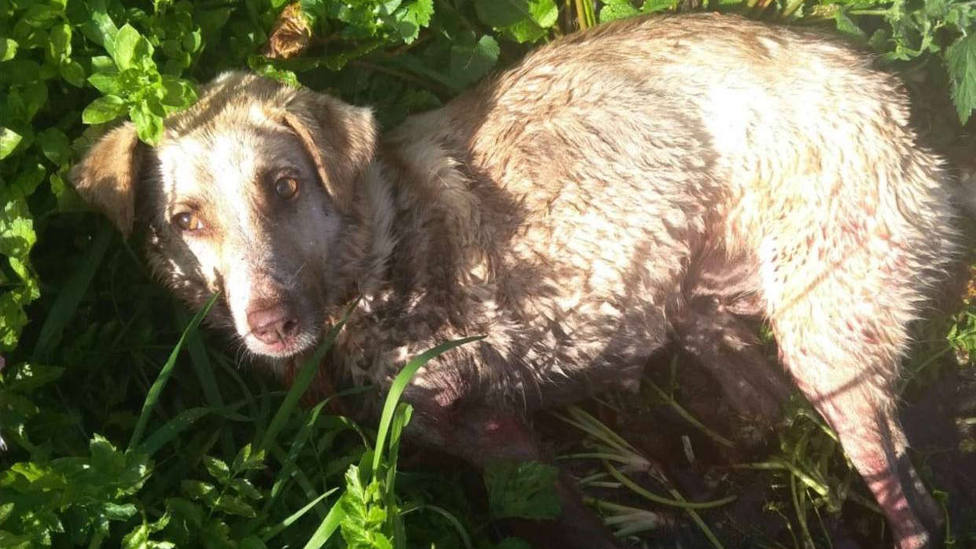 Investigado por maltrato animal el hombre que supuestamente disparó a la perra Alma