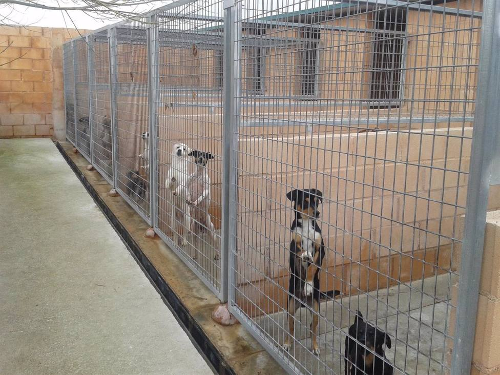 La Diputación convoca una línea de subvenciones para asociaciones protectoras de animales de la provincia