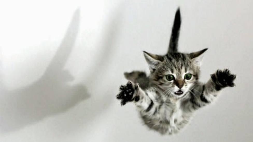 El gato encendió y le dio volumen al reproductor con la pata