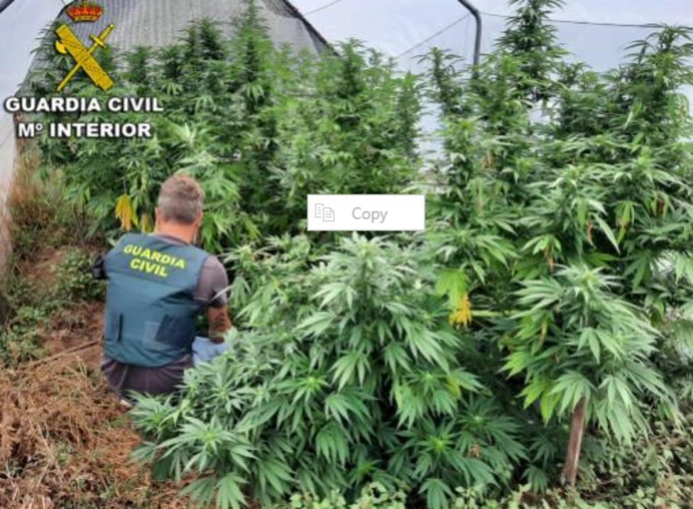 ctv-96t-plantacion-marihuana