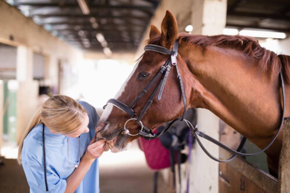 ctv-okh-especialista-caballos