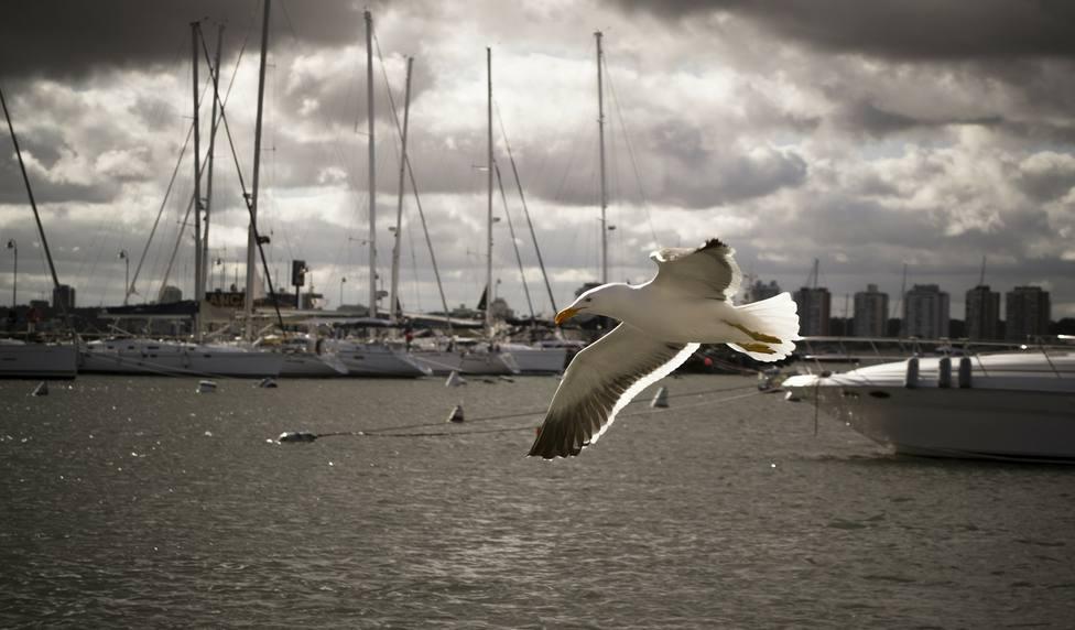 ctv-a9l-seagull-212447 1920