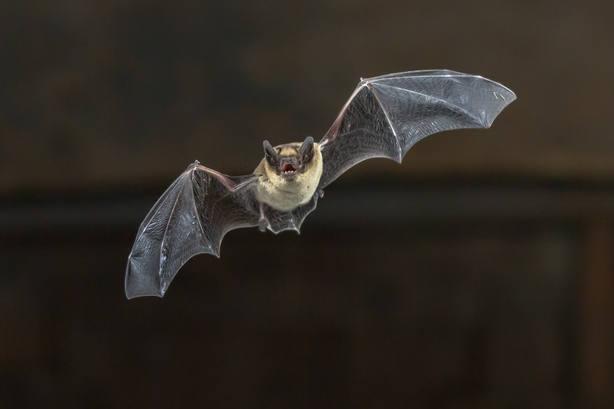 Aleta por murciélagos con rabia que mordieron a dos personas en Huelva y Valladolid
