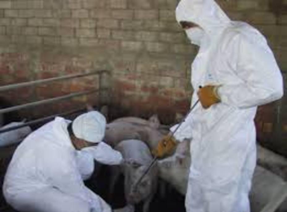 Agricultura concede 649.900 euros en ayudas a 47 agrupaciones de defensa sanitaria ganadera de la Región