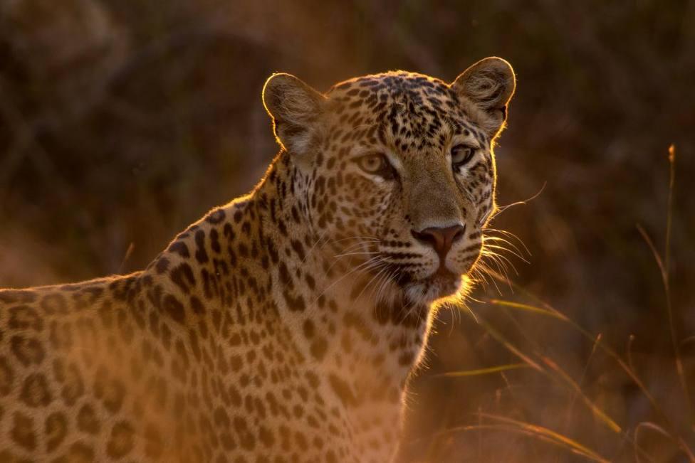 Estas son todas las especies animales amenazadas por el incendio de la Amazonía