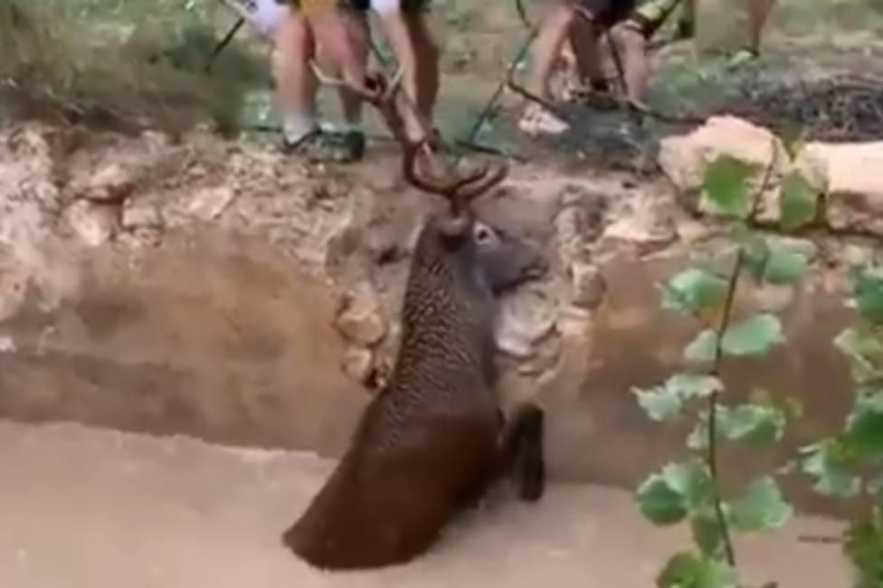 Un grupo de ciclistas realiza un emocionante rescate a un ciervo a punto de morir ahogado
