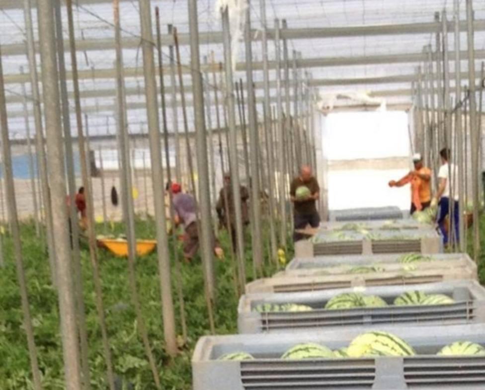 Los farmacéuticos alertan de que el 53% de los agricultores del Poniente almeriense no usan fotoprotector