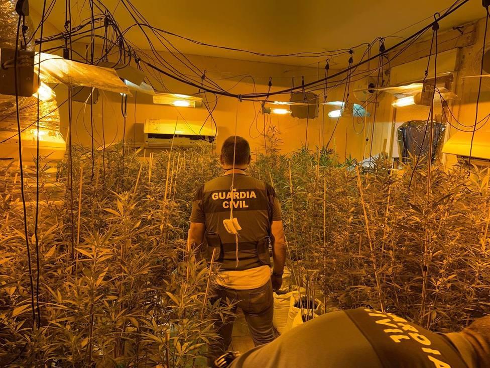 Dos detenidos con dos plantaciones de marihuana en viviendas de Almodóvar del Río