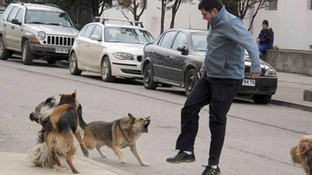 Un perro desgarra de un mordisco el pene a un hombre tras ser pateado