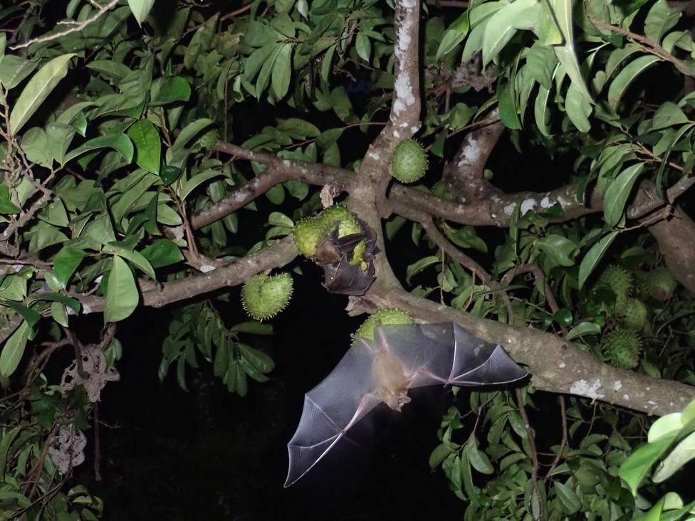 La actividad permitirá conocer más sobre los murciélagos de Esmelle