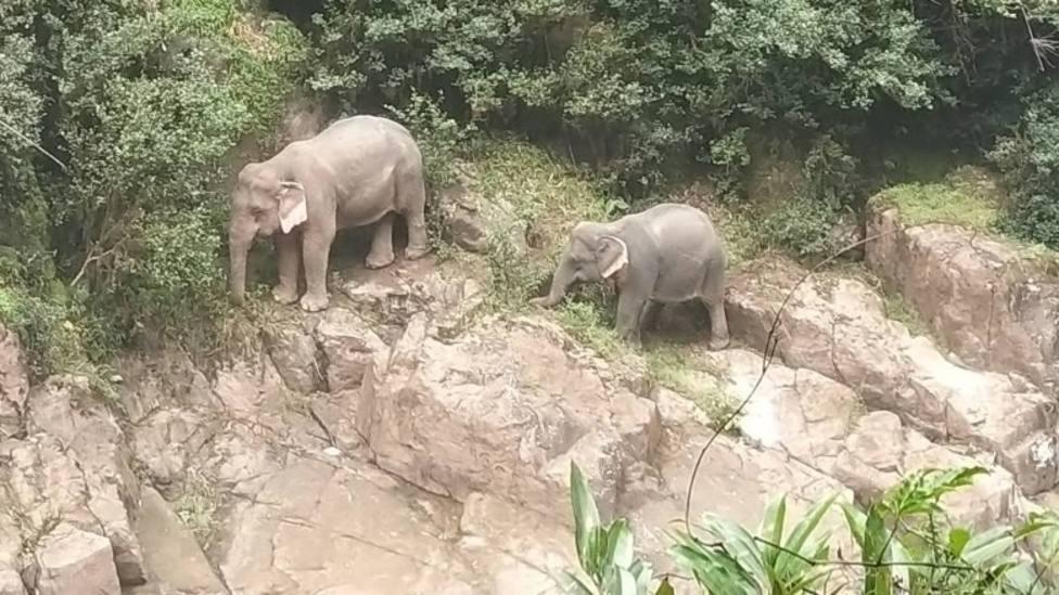 Así ha sido la trágica muerte de seis elefantes tras caer por una catarata en Tailandia