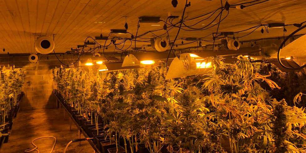Así es la plantación de marihuana desarticulada en Aranga