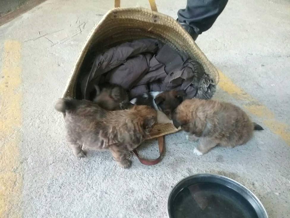 Cachorros que estaban a la venta en la feria mensual de Ferrol - FOTO: Policía Local Ferrol