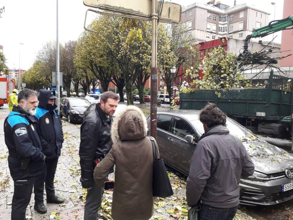 Revisión de todos los árboles tras el desplome de uno sobre dos coches en Lugo
