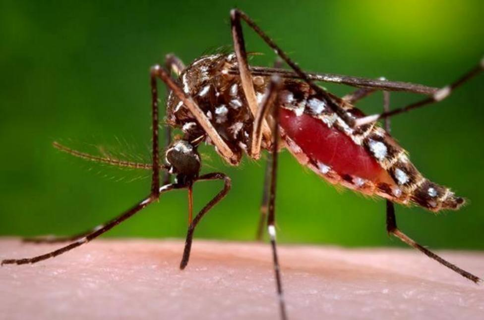 El innovador metodo de Ruanda para luchar contra los mosquitos de la malaria