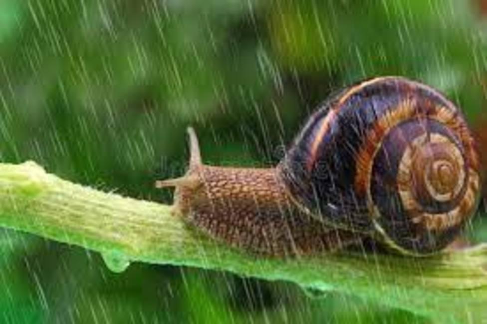 Caracol bajo la lluvia