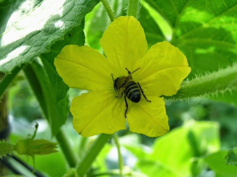 Grupo Agroponiente homenajea a los mejores polinizadores en su Día Mundial: Sin abejas, el mundo se acabaría
