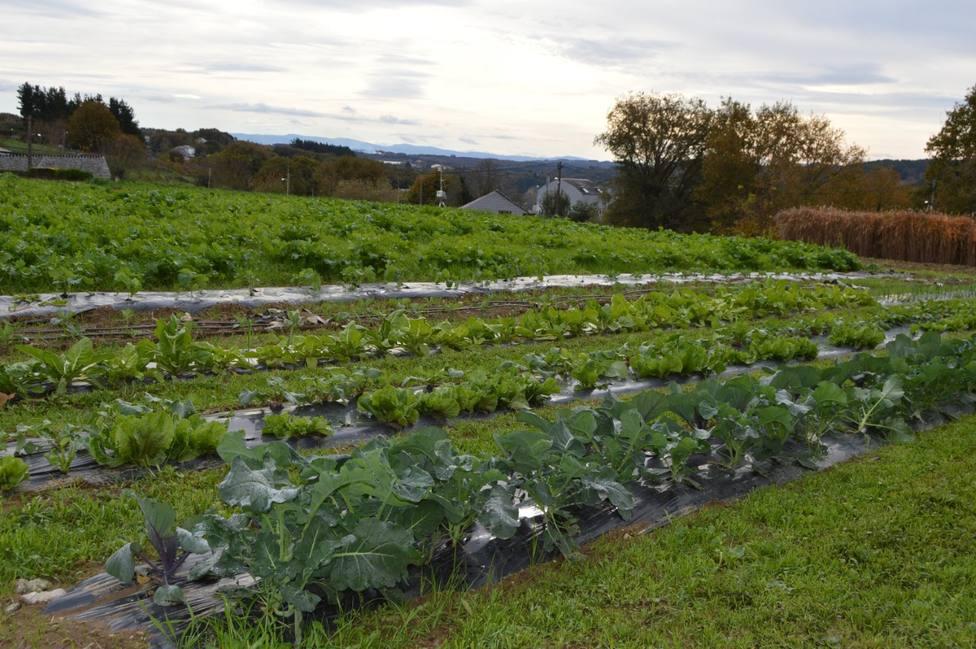 El campus de Lugo cede los productos cosechados en su finca experimental al Banco de Alimentos