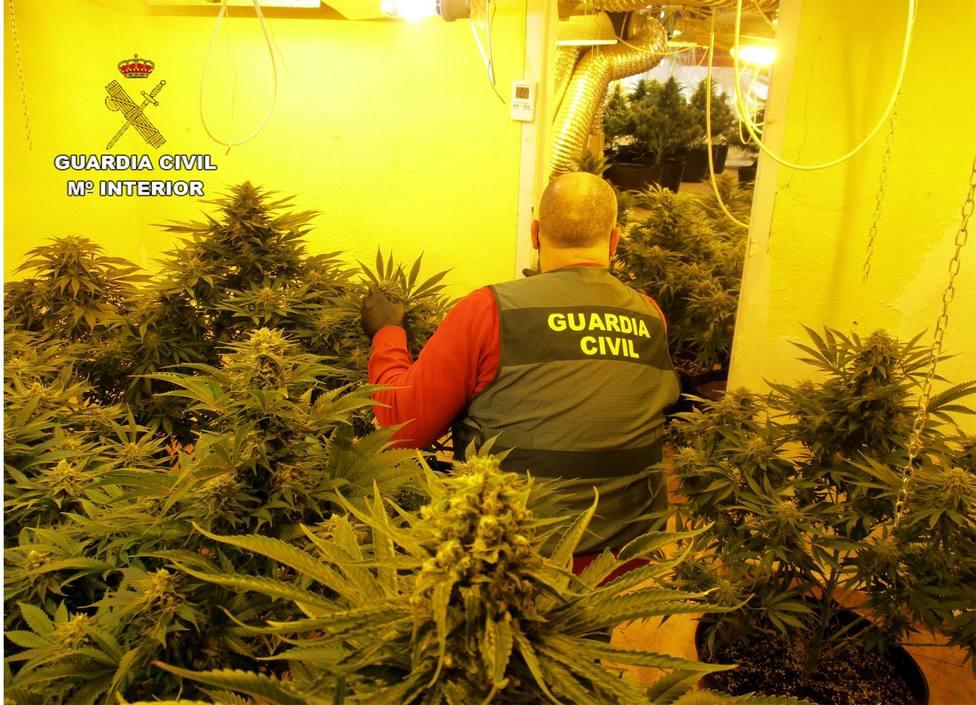 Desmantelan en San Javier un grupo dedicado al tráfico de droga y arrestan a sus cinco integrantes