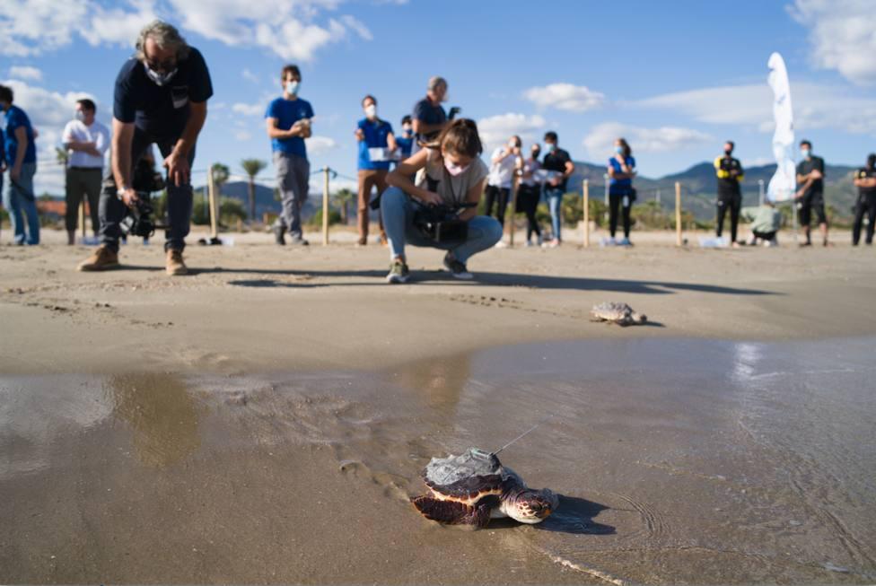 ctv-4vx-una-de-las-tortugas-con-emisor-satelital-entra-en-el-mar-en-octubre-de-2020