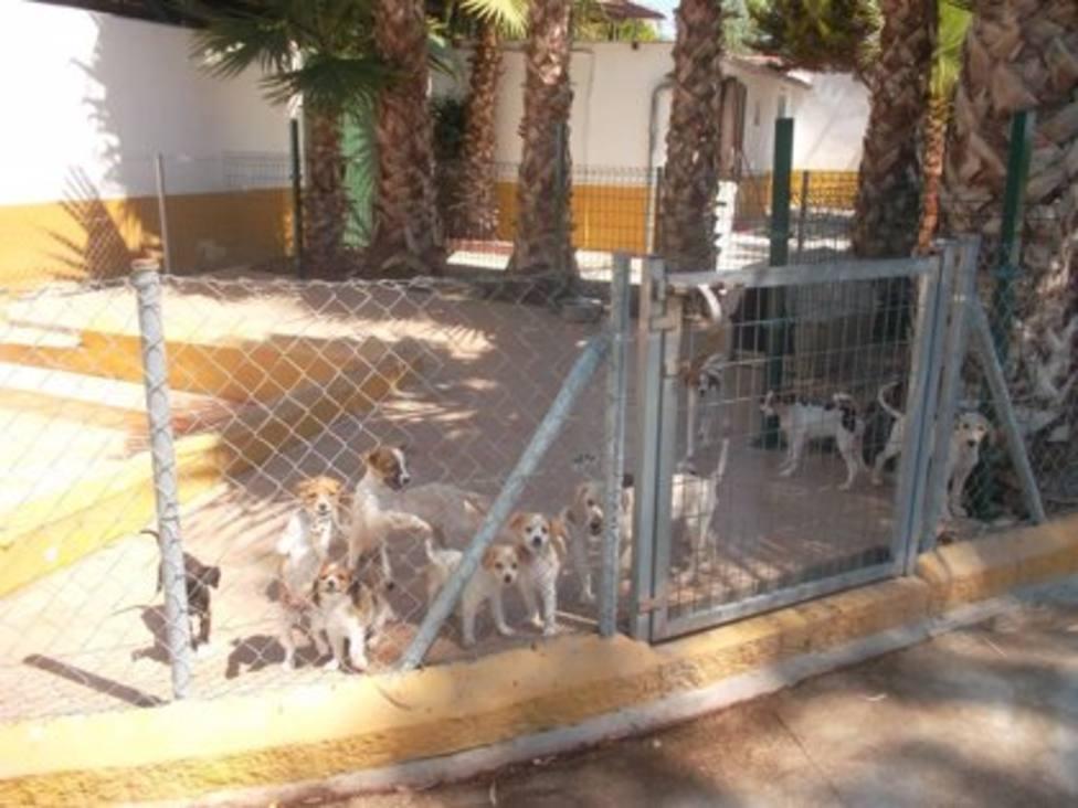 Imagen de una residencia canina