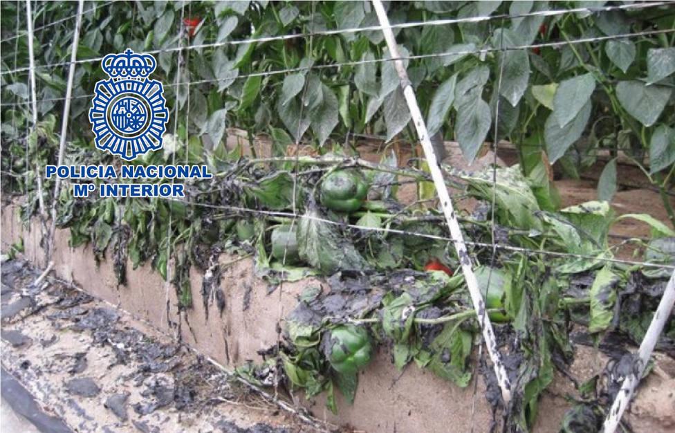 Detenido en El Ejido un pirómano que prendió fuego a varios invernaderos de la zona