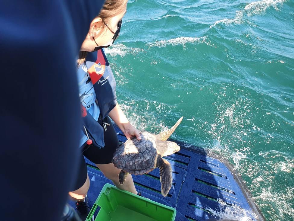 La tortuga marina Nbego fue localizada en abril en Cariño. FOTO: Xunta
